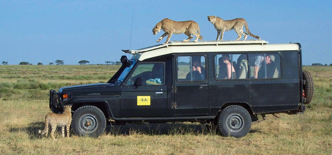 Auf Safari - Jeep Leoparden