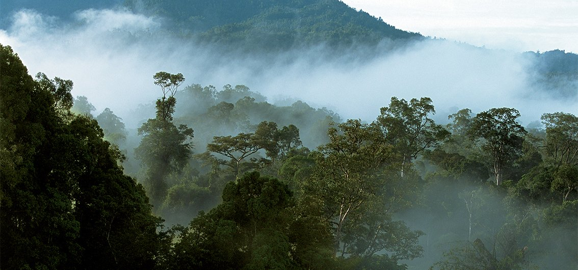 Borneo Highlands